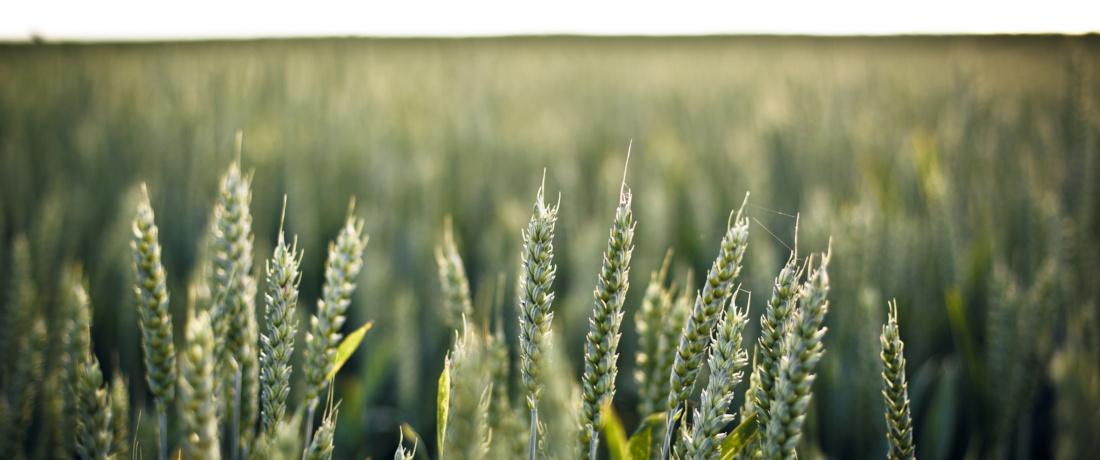 Bioplast för livsmedelsproduktion
